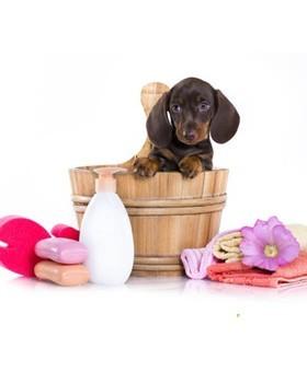 Canine cosmetics 2